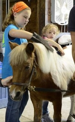 SpecialNeeds-pony-brushing